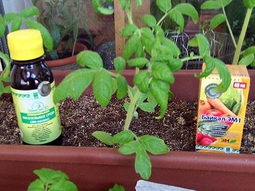 Купить среда питательную для растений и микроорганизмов «ЭМ-патока» компании Арго для выращивания рассады и хорошегоурожая