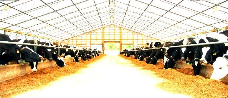 Микробиологический препарат Тамир применяется для устранения неприятного запаха в туалете, выгребных ямах и на фермах