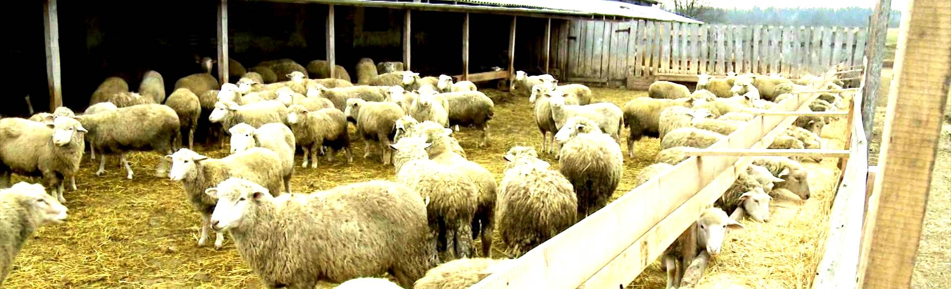 Микробиологический препарат Тамир применяется для устранения неприятного запаха в туалете, выгребных ямах и на ферме