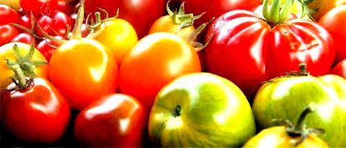 купить удобрение ургаса эмикс компании Арго для выращивания помидор, огурцов, хорошего урожая