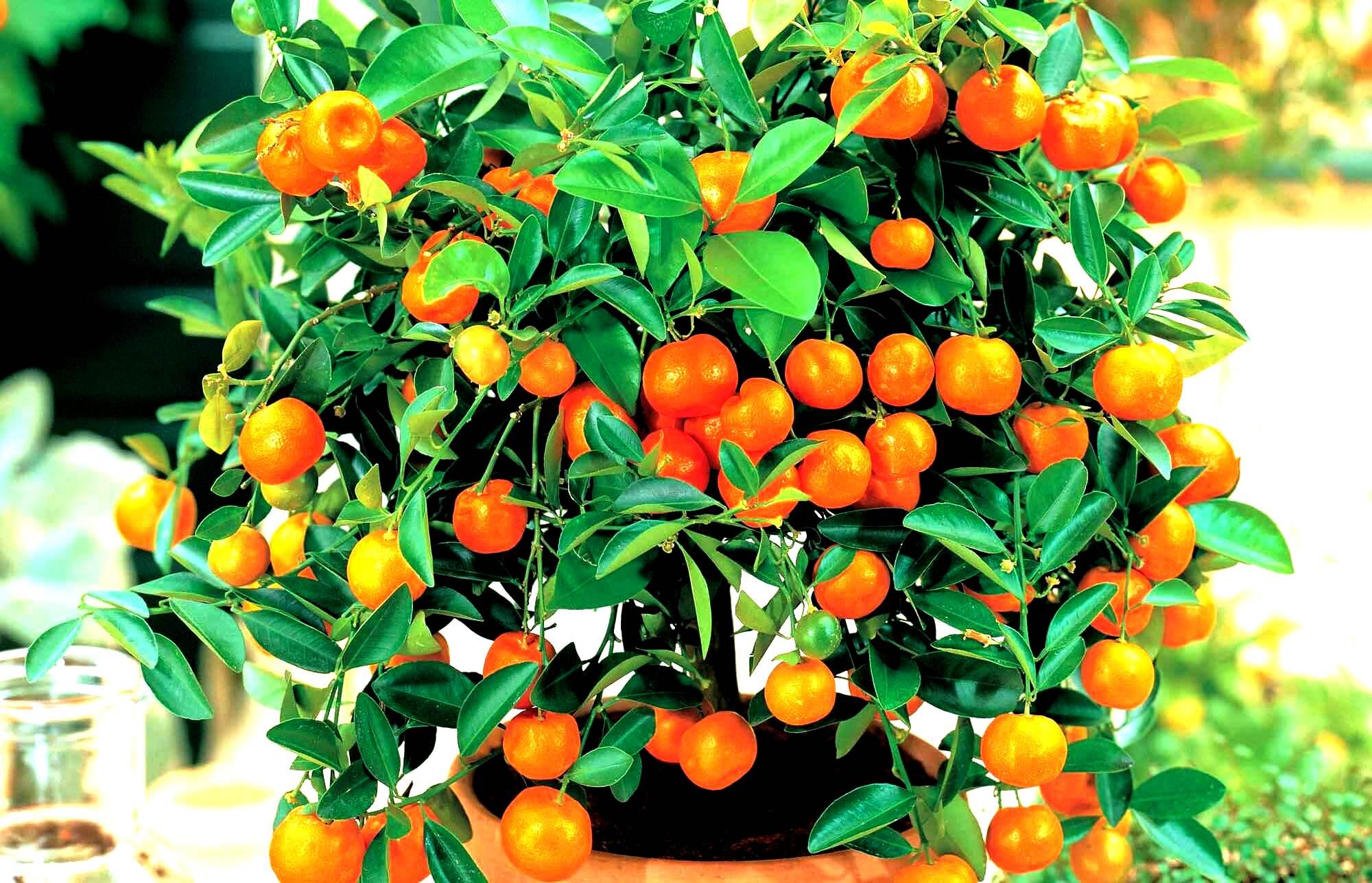 купить удобрение ургаса эмикс компании Арго для выращивания хорошего урожая