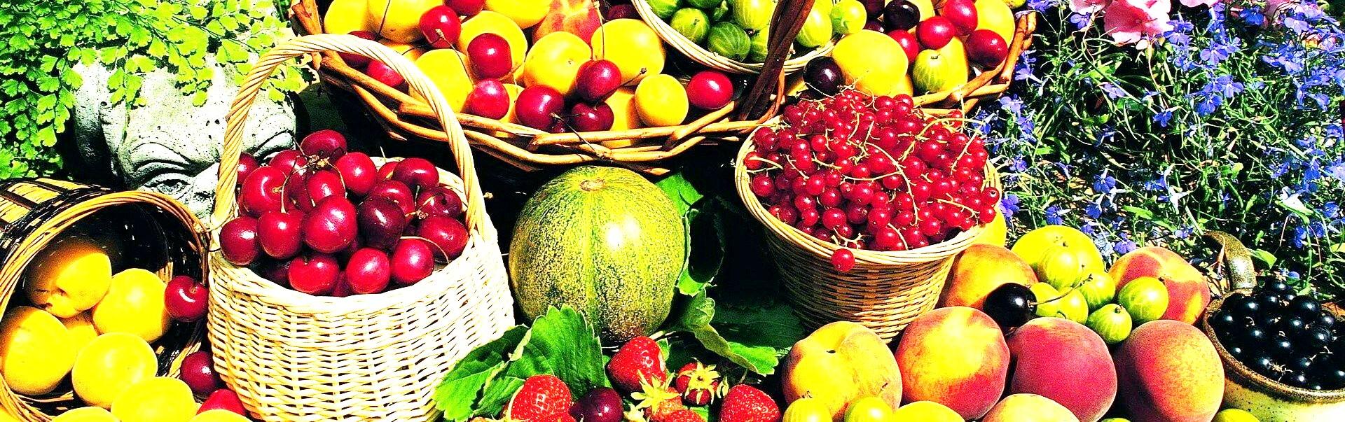 купить удобрение байкал-эм 1 компании Арго для выращивания овощей и фруктов, хорошего урожая