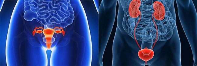 лечение мочеполовой системы женщины и мужчины