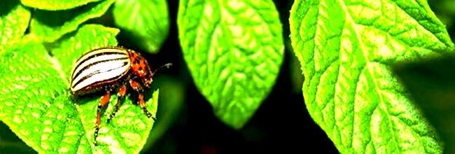 защита растений от вредителей